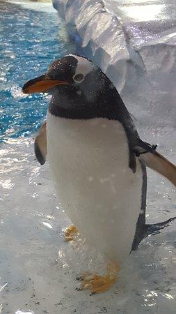 Royal Oak, MI: Penguin in penguinarium.
