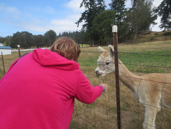 Friday Harbor, WA: This little guy was so friendly and my friend is feeding him weeds!