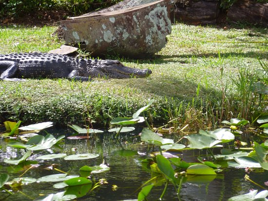 Everglades Area Tours: Great day a must if your visiting Miami