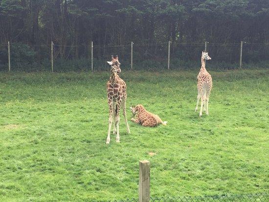 Blackpool Zoo : photo0.jpg