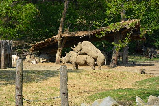 Zlin, Repubblica Ceca: intimní náhled k nosorožcům