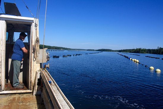 """Yarmouth, Kanada: A must for oyster lovers and even the curious on """"how do the grow oysters?"""""""