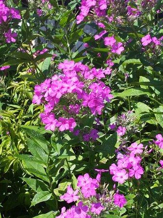 Blooms at the Flowering Bridge, Lake Lure, NC