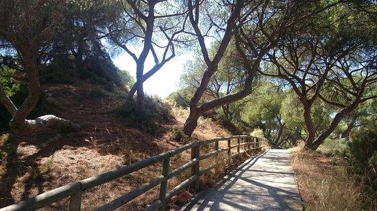 Enebrales de Punta Umbria