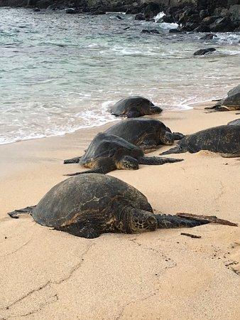 Paia, هاواي: photo2.jpg