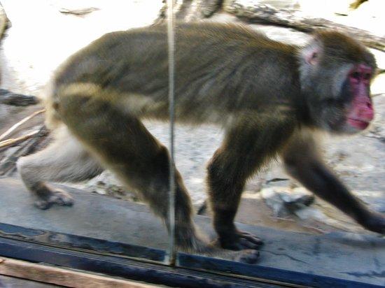 Riverhead, estado de Nueva York: monkey