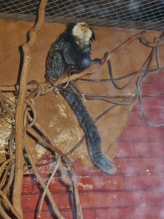 Riverhead, estado de Nueva York: shy monkey