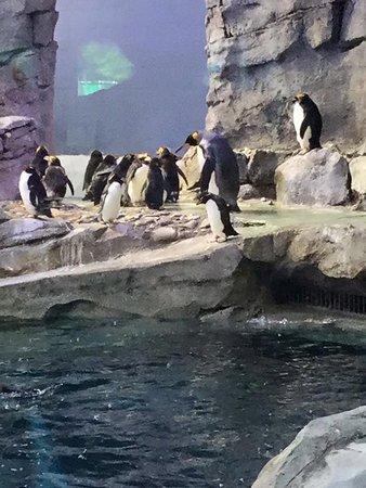 Royal Oak, MI: Penguin exhibit