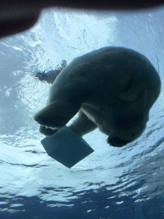 Royal Oak, MI: polar bear butt lol