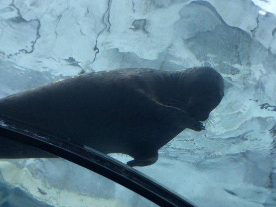 Royal Oak, MI: cute seal