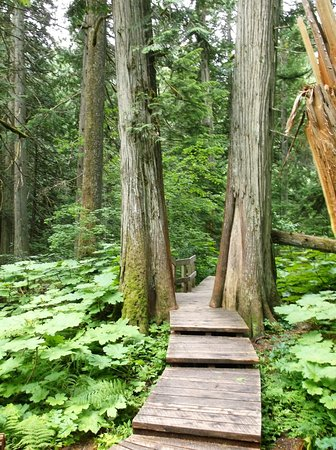 Giant Cedars Boardwalk Trail: Giant Cedars Boardwalk