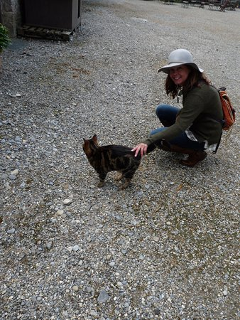 Clonegal, Ирландия: happier cat