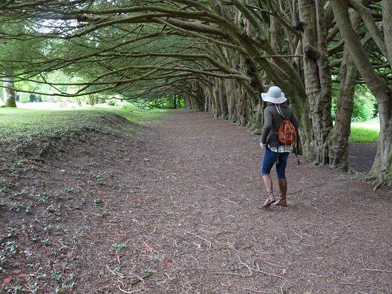 Clonegal, Irlandia: yew walk best part
