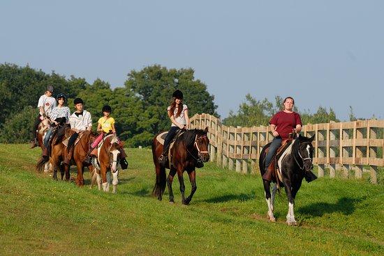 Uxbridge, كندا: Horseback Trail Ride at Pathways on Pleasure Valley