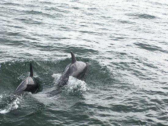 Dolphinwatch: photo0.jpg