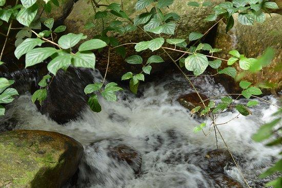Raub District, Malásia: River flows