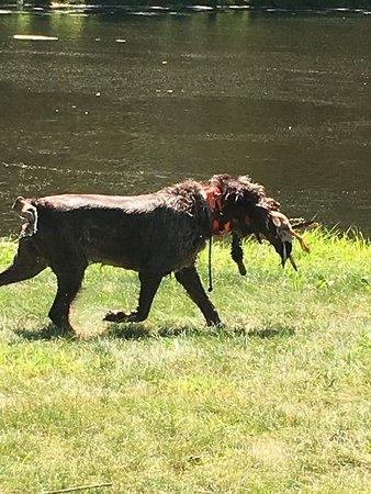 Marlboro, NY: Loved watching early morning dog training!  Super pet friendly location.