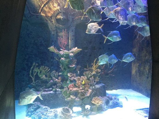 Marine Habitat at Atlantis: photo7.jpg