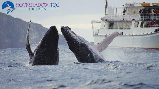 Nelson Bay, Austrália: Whale Watching