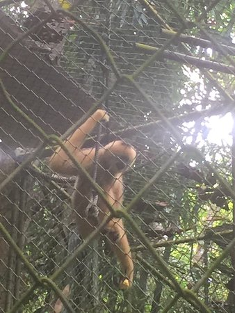 Jorn in the forest - Picture of Gibbon Rehabilitation ...