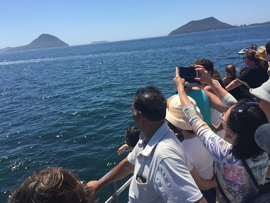 อ่าวเนลสัน, ออสเตรเลีย: Dolphin Watching