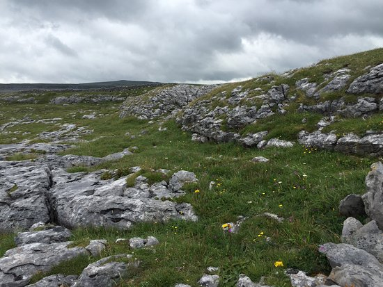 Kilfenora, Irlanda: Wildflowers everywhere once you look closely.