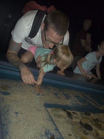 Manteo, Carolina del Norte: exploring another touch tank