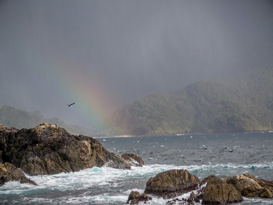 Manapouri, Nueva Zelanda: Albatross in a rainbow. We had two fly around our boat which was amazing.