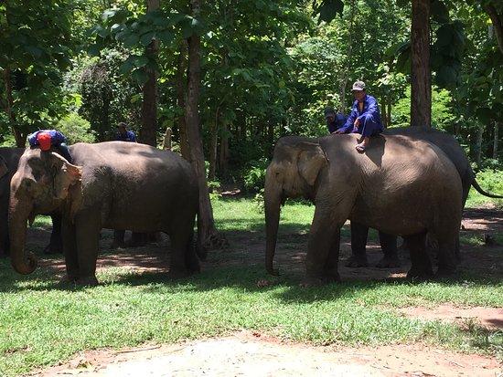 Ban Xieng Lom, Laos: Elephant Village Mahouts Luang Prabang