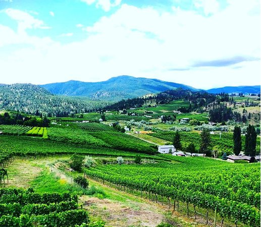 West Kelowna, Kanada: No complaints out here in wine country!