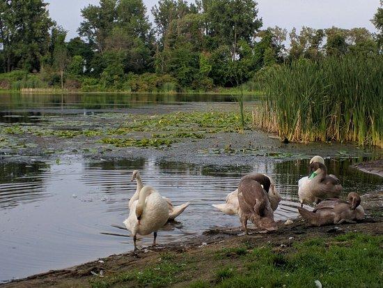 Bay City, ميتشجان: Lakeside at the Park