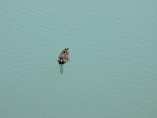 Nuriootpa, Australia: On the Lake
