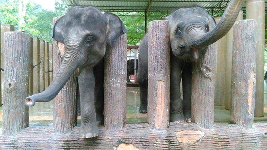 Pahang, Maleisië: Kuala Gandah Elephant Sanctuary