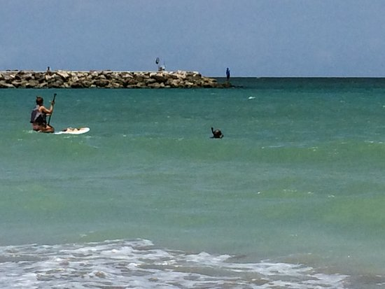 Fort Pierce, Floride : Paddle Boarders and a snorkler