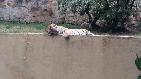 Foto De Zoologico De Cali Cali Juegos Para Ninos Tripadvisor