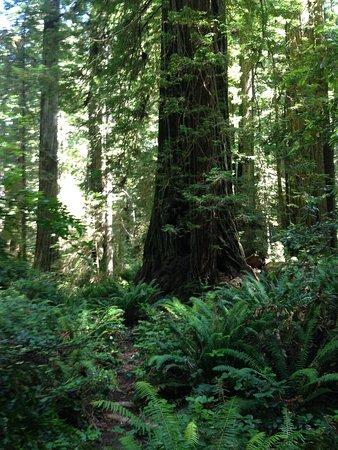 Prairie Creek Redwoods State Park: photo1.jpg