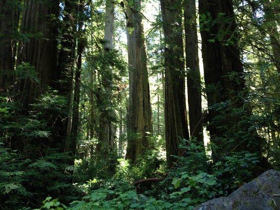 Prairie Creek Redwoods State Park: photo2.jpg