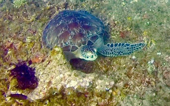 Manta Dive Gili Air Resort: photo0.jpg