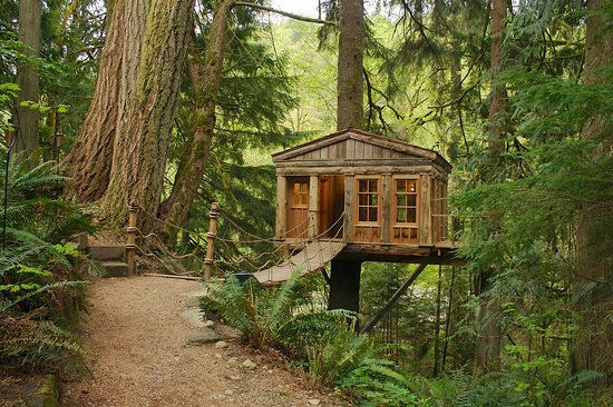 treehouse point updated 2017 bb reviews issaquah washington tripadvisor