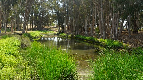 Los Osos, Kalifornia: Pond in the Bird Sanctuary