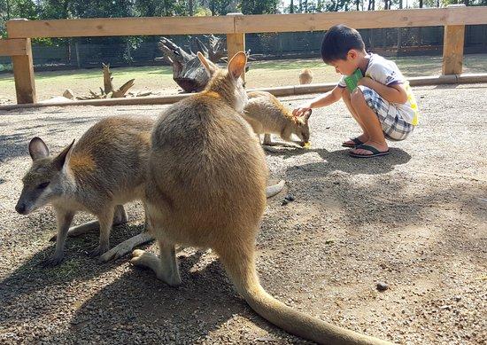 Blacktown, Australia: Walabis