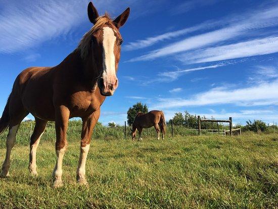 Makawao, HI: Love Piiholo Ranch!