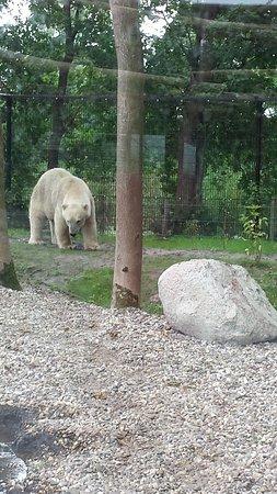 Leeuwarden, Belanda: ijsberen verblijf met glas
