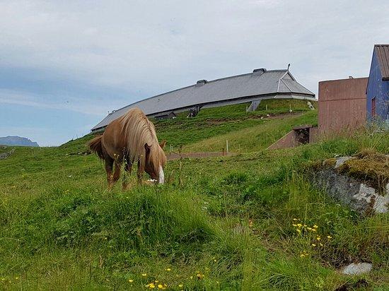 Vestvagoy, Norveç: 20160726_134931_large.jpg