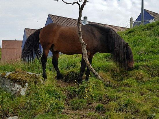 Vestvagoy, Norveç: 20160726_134929_large.jpg