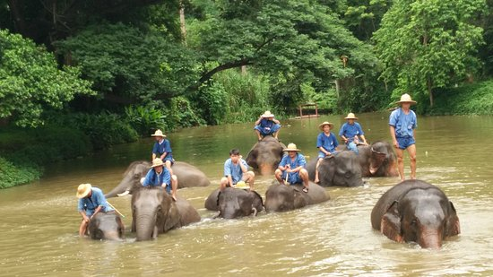 ‪Thai Elephant Conservation Center‬
