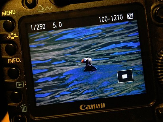 Puffin during our day cruise to Fox Island via Kenai Fjords Tours