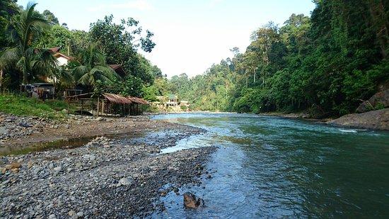 Harimau Sumatra: DSC_0275_large.jpg