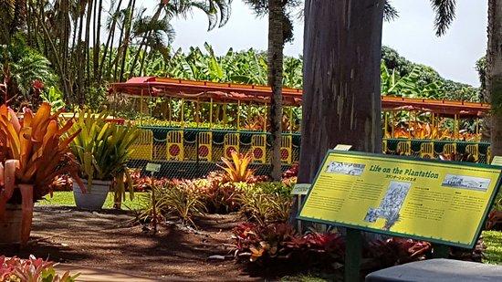 Wahiawa, Hawái: 20160716_114421_large.jpg