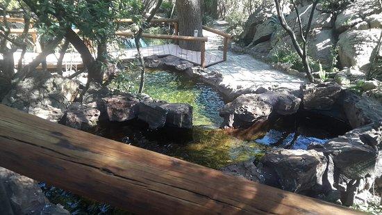 Roodepoort, Güney Afrika: Amadwala Lodge